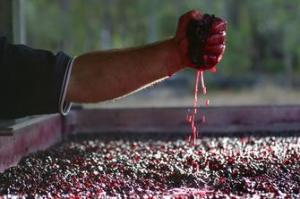 artigiani vino